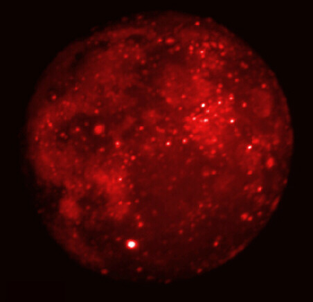 Eclipsed Moon in Infrared
