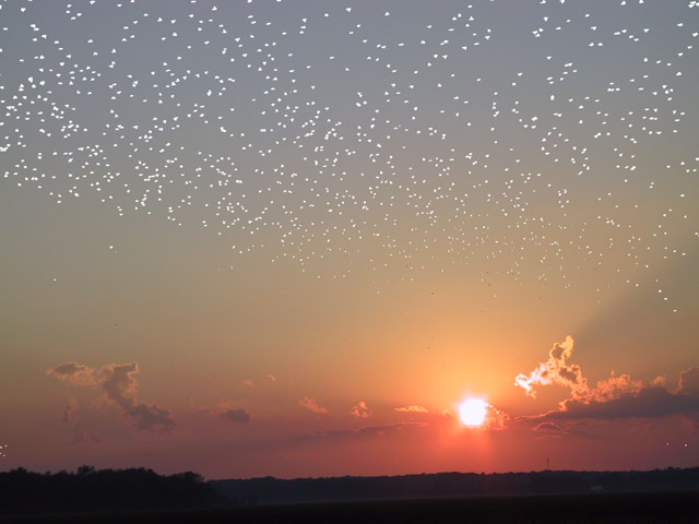 A Flock of Stars