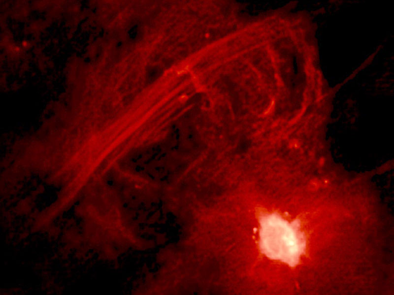 The Galactic Center Radio Arc