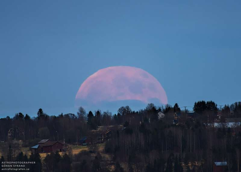 A Strawberry Moon