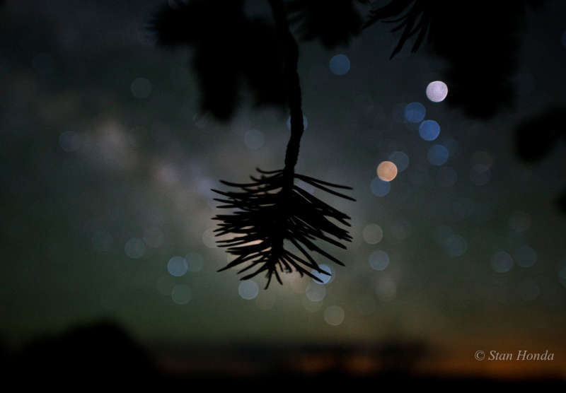 Star Colors and Pinyon Pine