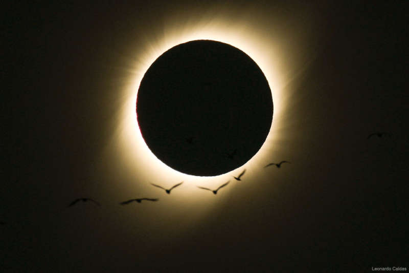Birds During a Total Solar Eclipse