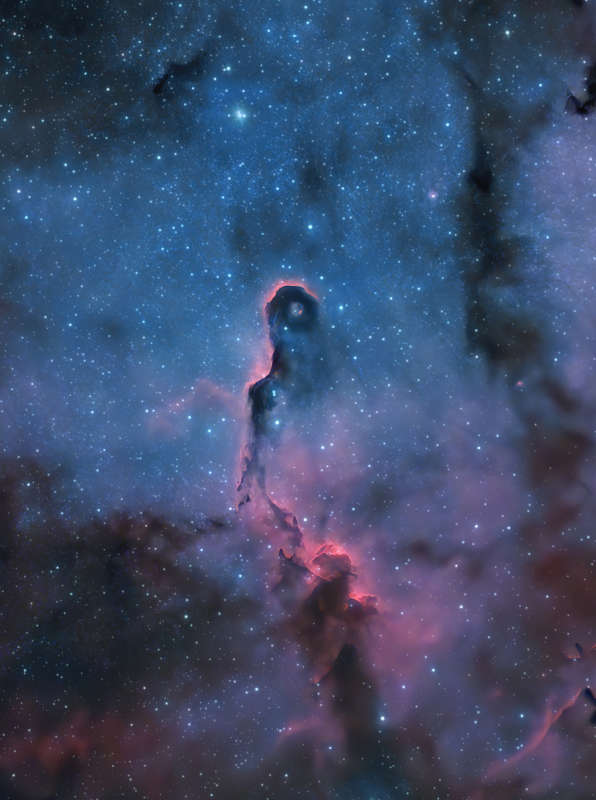 The Elephant's Trunk Nebula in Cepheus