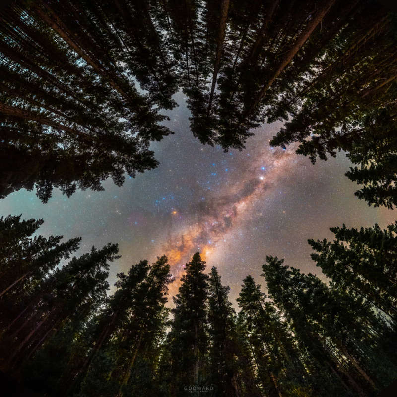 Framed by Trees: A Window to the Galaxy